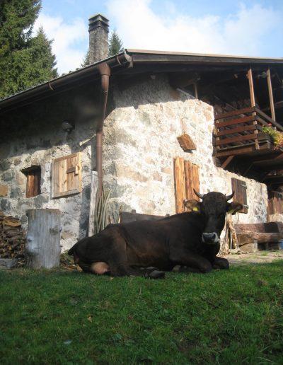 Trentino (11)