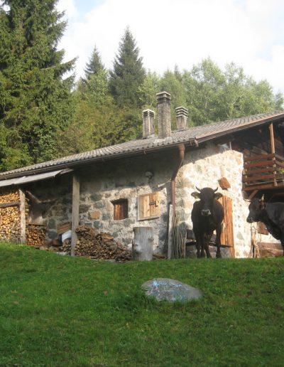 Trentino (12)