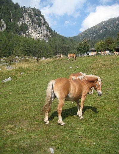 Trentino (13)