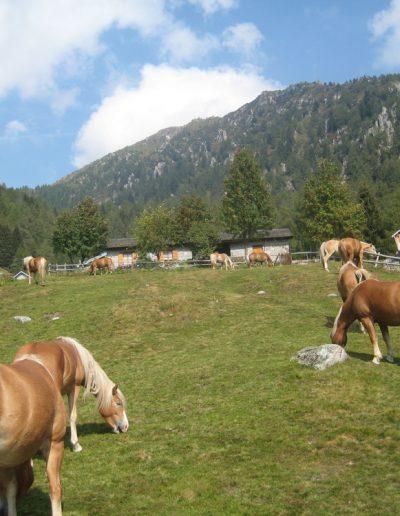 Trentino (14)