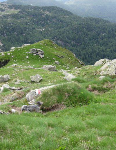 Trentino (38)