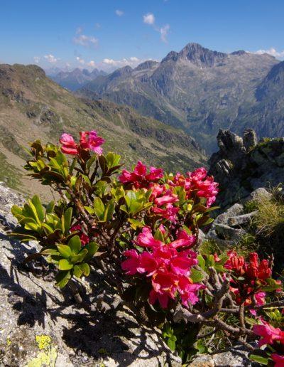 Trentino (7)